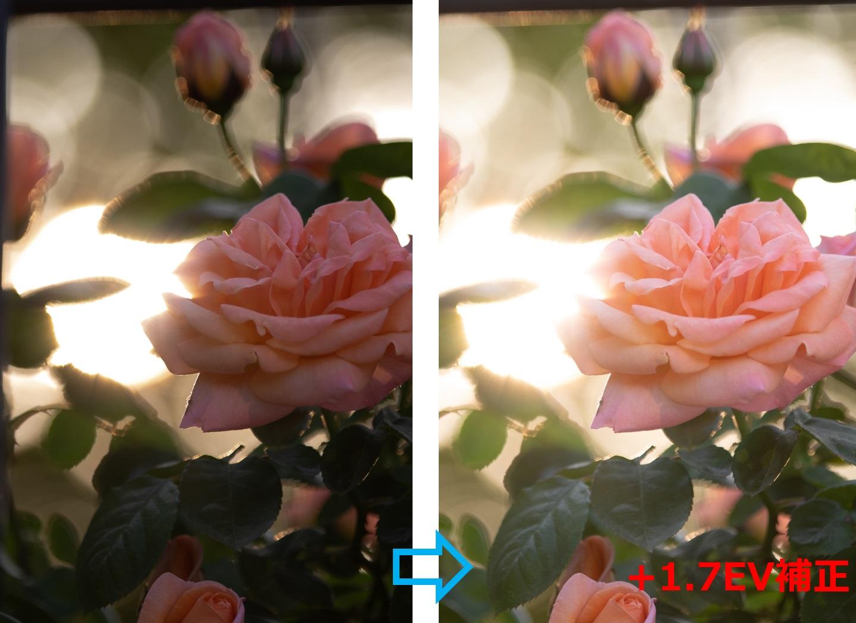 逆光で暗い画像を露出補正で明るくする